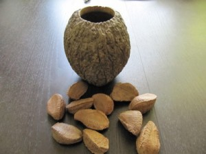 Brazil Nut Fruit and Seeds