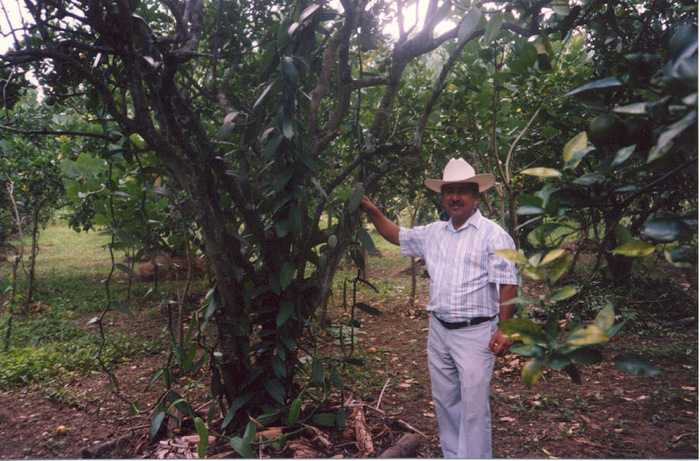 1-grower on plantation